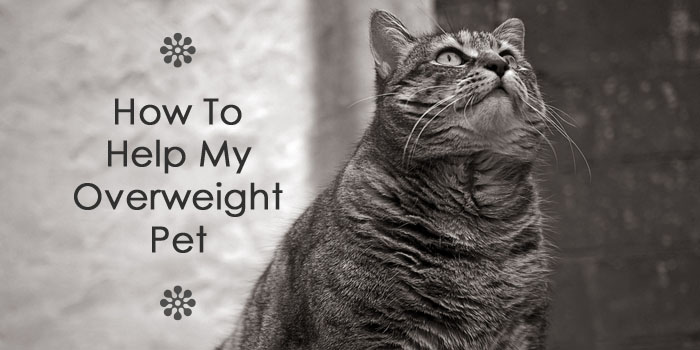 how to help overweight pet