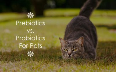Prebiotics vs. Probiotics For Pets