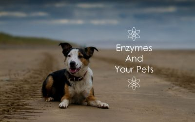 Enzymes And Your Pets