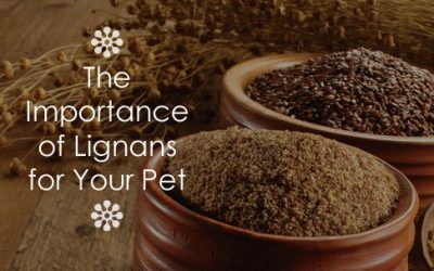 The Importance of Lignans for Your Pet